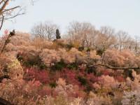 花見山15